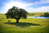 Isaías 27:6