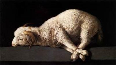 Isaac-lamb