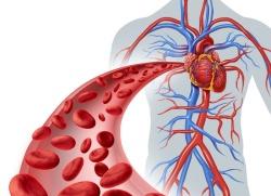 Circulación-de-la-sangre.jpg