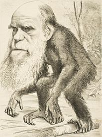 Editorial_cartoon_depicting_Charles_Darwin_as_an_ape_(1871).jpg