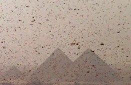 plagas-egipto-portada.jpg